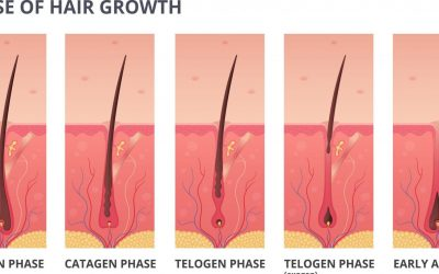 The Hair Growth Cycle Comprehensively Explained